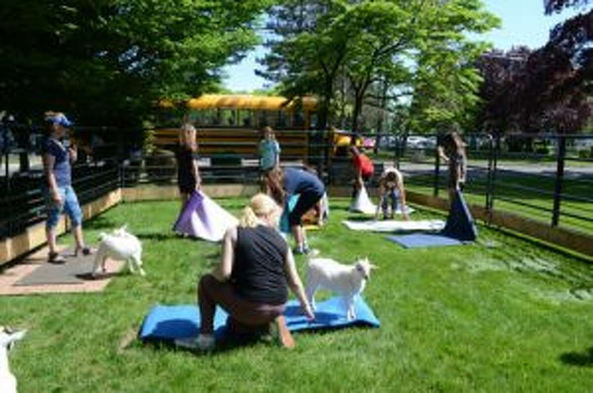Participants interacting with the goats as they set up for the yoga session.