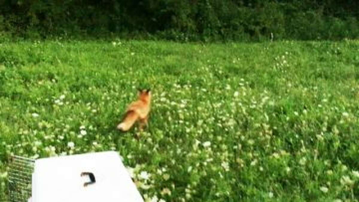 New Canaan: A guest column from New Canaan Animal Control Officer Allyson Halm.