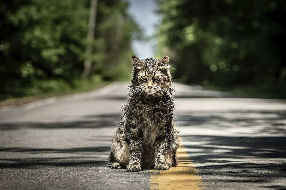 "Church the cat has seen better days in ""Pet Sematary."" Photo: Paramount Pictures / IMDB"