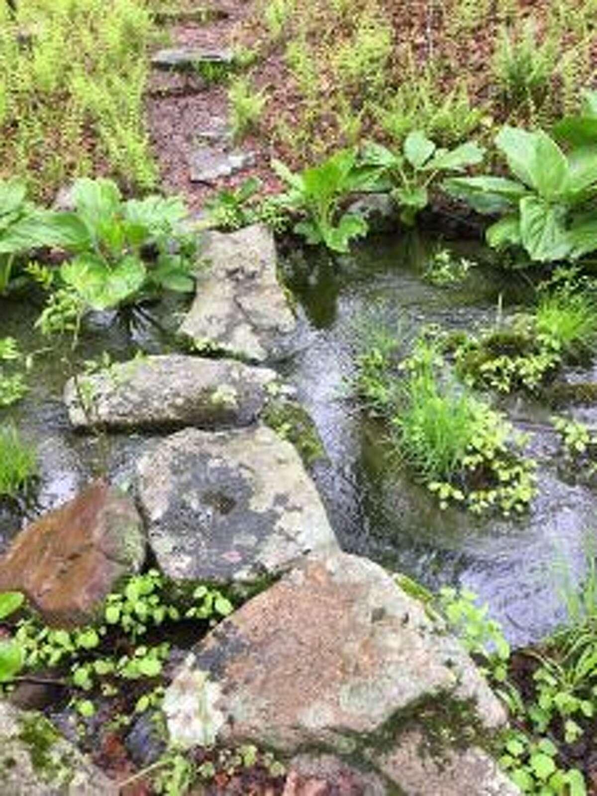 A brook in Devil's Den