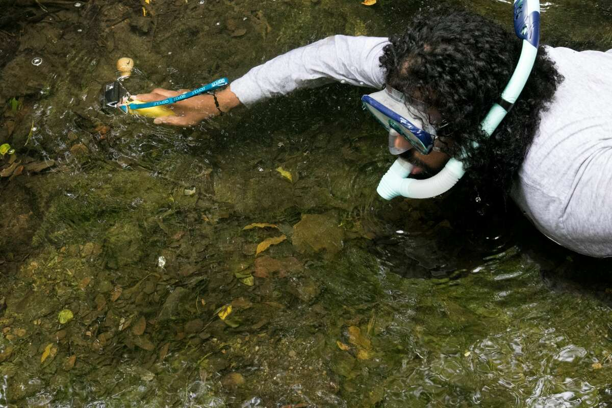 Drew Costley searches for fish with a Go Pro while snorkeling in Sausal Creek in Oakland, Calif. on June 24th, 2019.