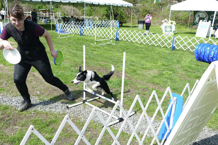 A dog follows a trainer as it jumps over a hurdle in the Dog Days event at the New Canaan Nature Center on Saturday, May 4, 2019. Grace Duffield / Hearst Connecticut Media / Connecticut Post