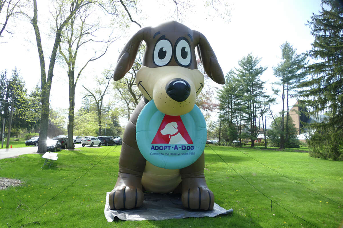 A blow-up dog greeted visitors who were attending the Dog Days event at New Canaan Nature Center on Saturday May 4, 2019. The event benefited Adopt-a-dog. Grace Duffield / Hearst Connecticut Media