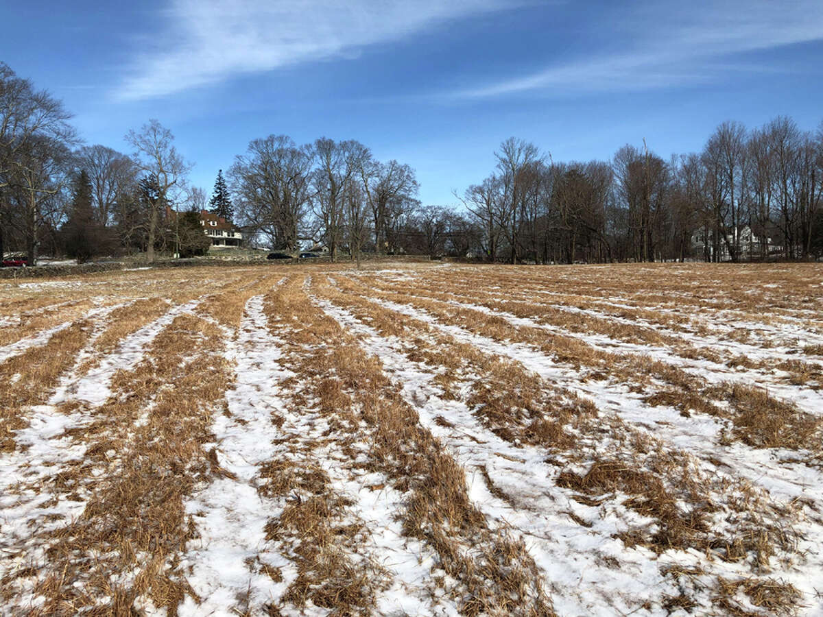 The New Canaan Land Trust has ramped up its meadow work this winter.