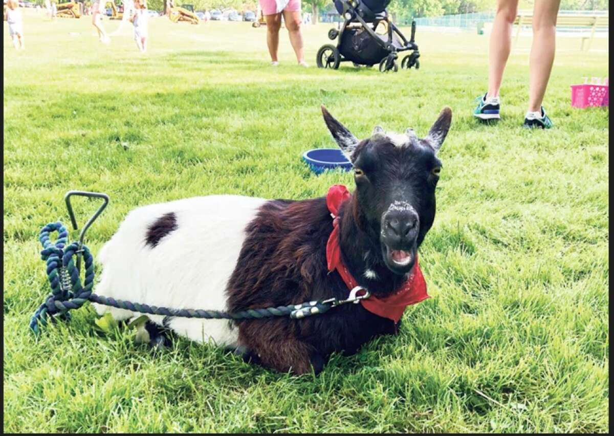 Down on the Farm will return to the Darien Nature Center on Saturday, May 25, featuring animals, food, and fun family events.