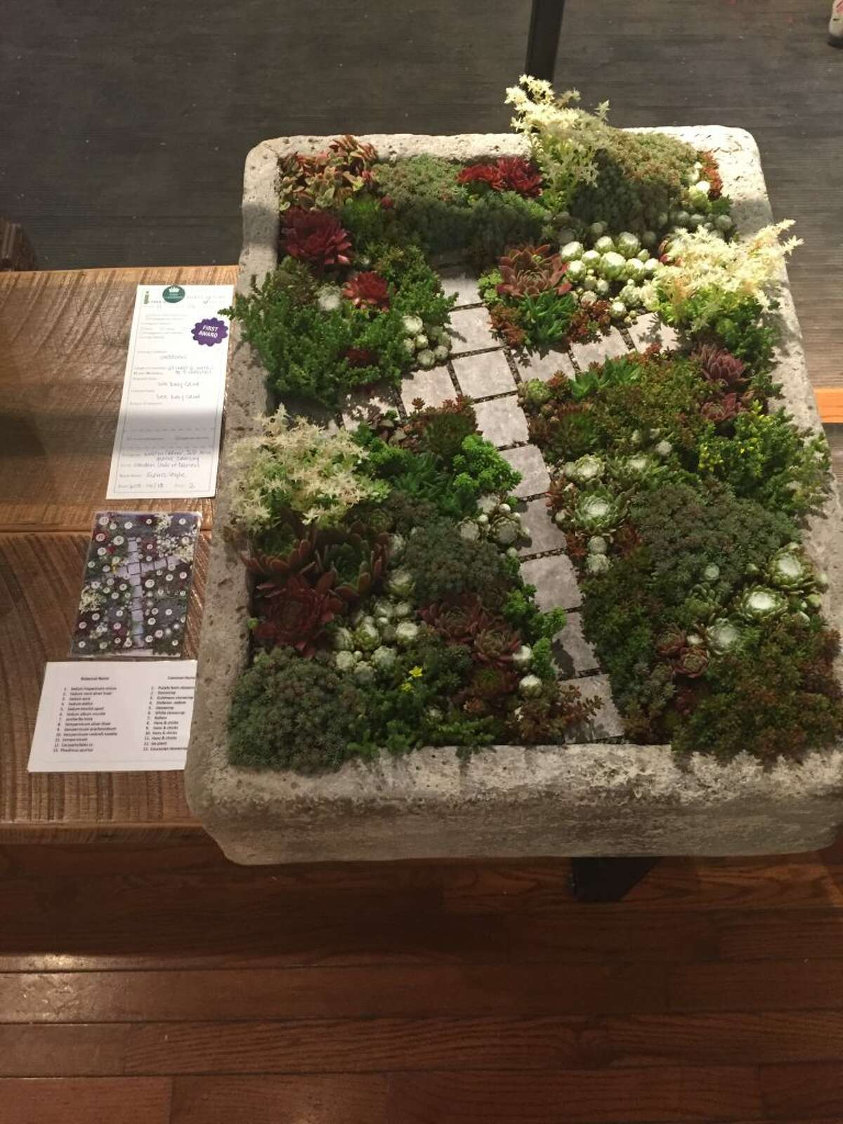 Succulent garden: New Canaan Garden Club's June 2018 Flower Show, Iconicstyle, A Design Legacy. Winner Horticulture Class 11 Stone Trough, designed and planted by Maeve Zamsky, Kristin Collier, and Iris Mix - all of The Garden Club of Darien.