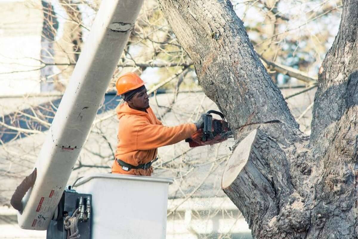 Tree trimming is a regular part of the efforts to maintain utility lines. This tree work went on Thursday, Dec. 8, on Main Street. - Ian Murren photo