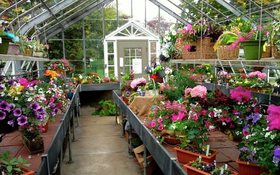 Ballard Greenhouse in Ridgefield is ready for this weekend's plant sale.