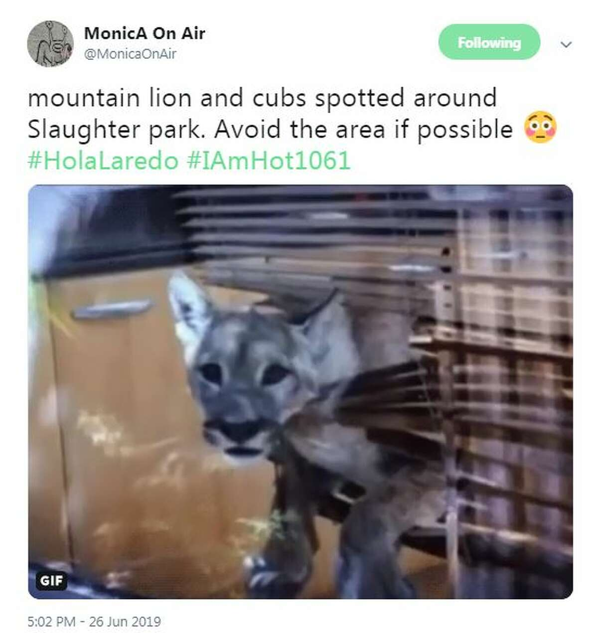 Laredoans react to the news of a mountain lion sighting at Slaughter Park.
