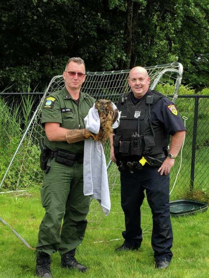 North Greenbush Police Officer J. Gervais and state Department of Environmental Conservation Officer J. Cox freed an owl caught in a soccer net on June 21, 2019. The owl was not injured. Photo: North Greenbush Police Department