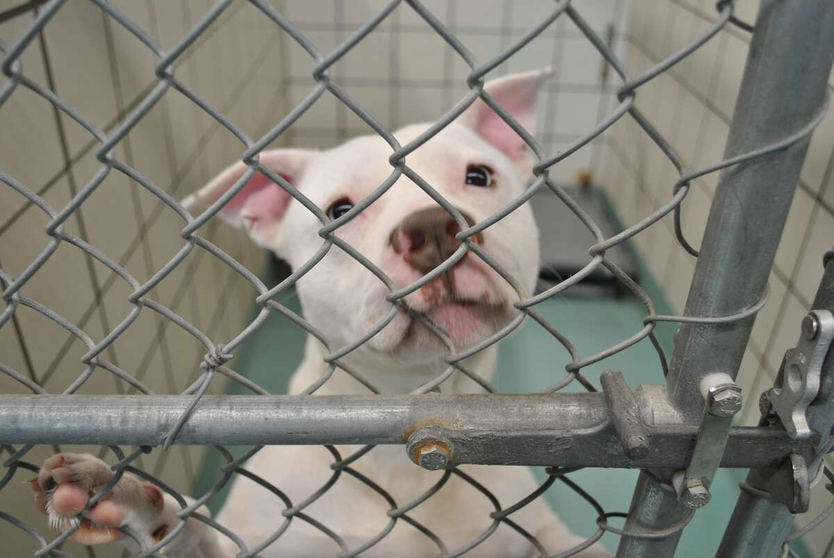 Through July 1, the Pasadena Animal Shelter and Adoption Center is reducing its adoption fee to $25 for animals that have been at the shelter for at least 25 days. The shelter is 104 animals over its