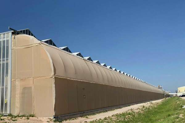Hemp rush begins on West Texas farms - ExpressNews com
