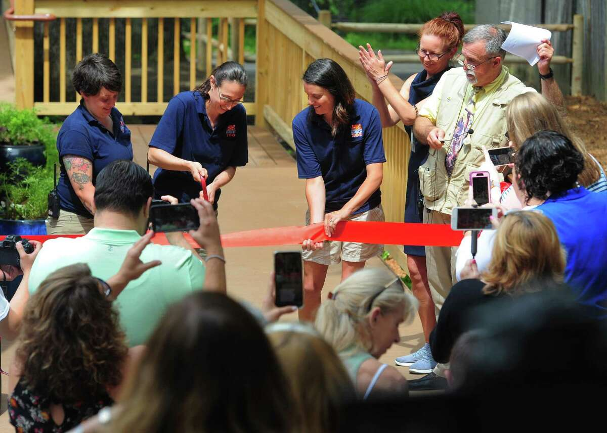 Zoo employees cut a ribbon to welcome two Black-Handed Spider Monkeys who are the newest residents at Beardsley Zoo in Bridgeport, Conn., on Saturday June 29, 2019. The male Spider monkey born in 2014 named Gilligan and a female Spider monkey born in 2000 named TT (Short for Tina Turner), have joined the zoo from the Henry Doorly Zoo and Aquarium in Omaha, Neb.