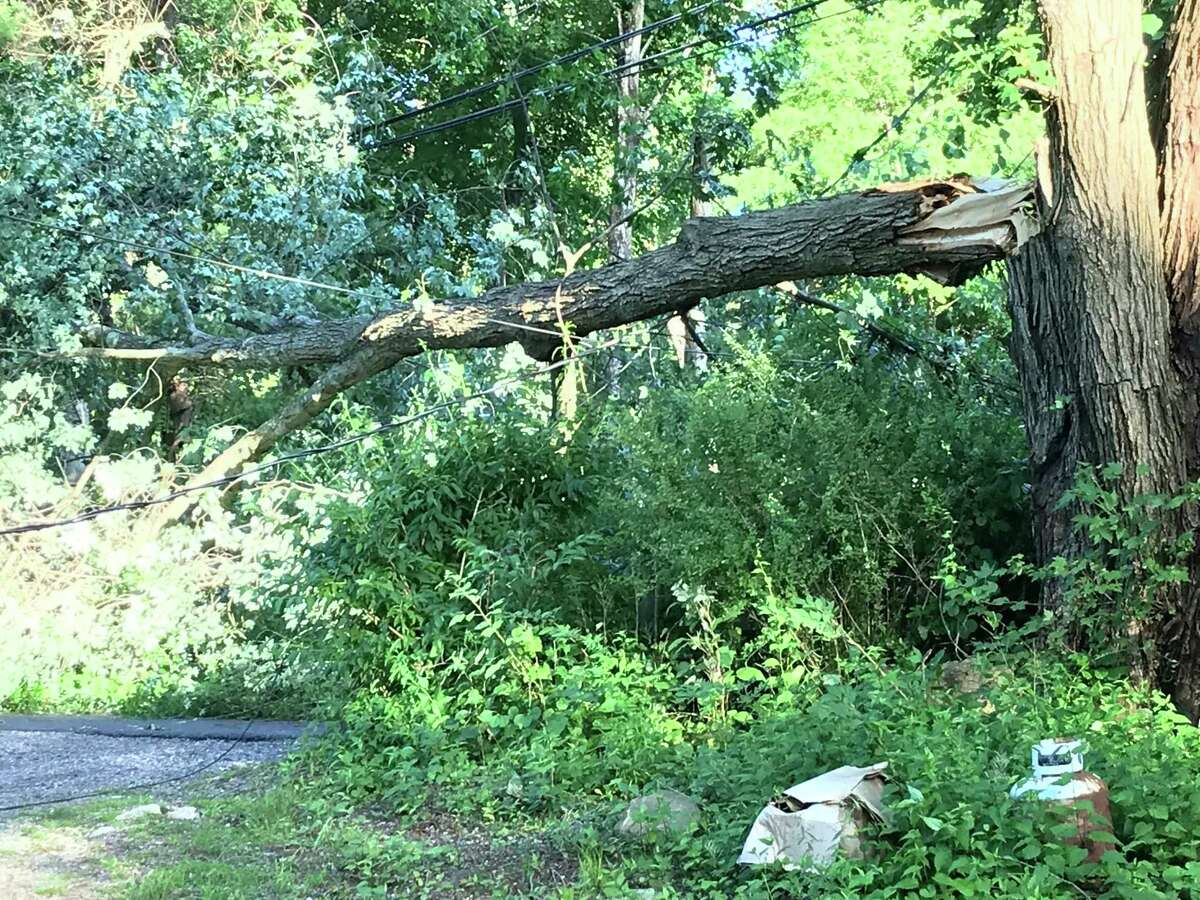 A tree knocked down from the storm over the weekend. Taken at 11 a.m. on River Road in Weston, CT.
