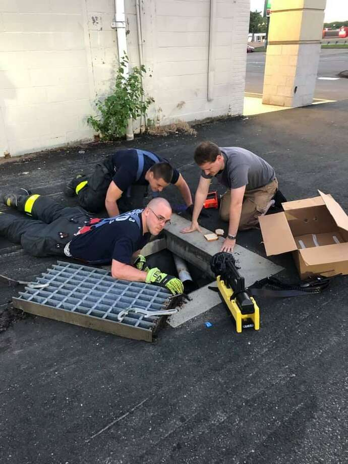 East Haven firefighters rescued five baby ducklings the evening of June 30, 2019, that were trapped in a pipe between two storm drains. Clockwise from bottom are firefighter Gordon Stewart, firefighter Tim Proto and Police Department Animal Control Officer Sean Godejohn. Photo: James Oca / Contributed Photo