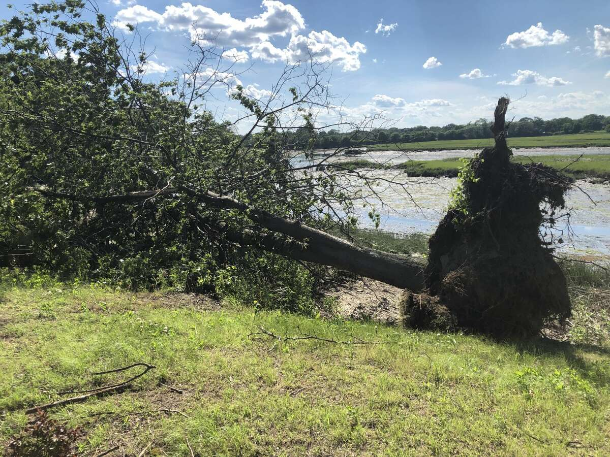 An uprooted tree lies along Ash Creek in Bridgeport, Connecticut, on Monday, July 1, 2019, one day after a strong thunderstorm hit the area.