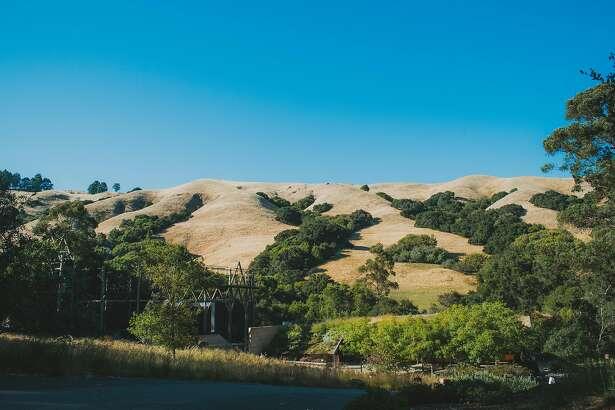 Cal Shakes' Bruns Amphitheater is nestled in the Orinda hills.