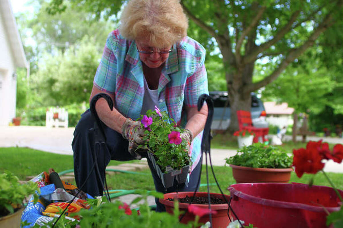 Retha Anders braves the heat Monday to plant flowers at her home in Winchester. She recently had gone to buy a couple more plants and returned home with more than she had planned, she said.