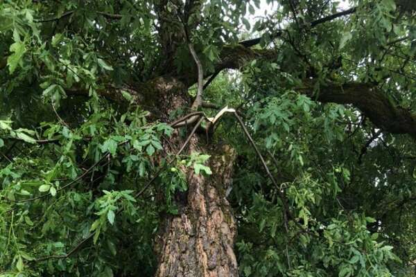 An EF-0 tornado on Monday afternoon downed trees in northeast Portland, Oregon near 21st Avenue and Going Street.