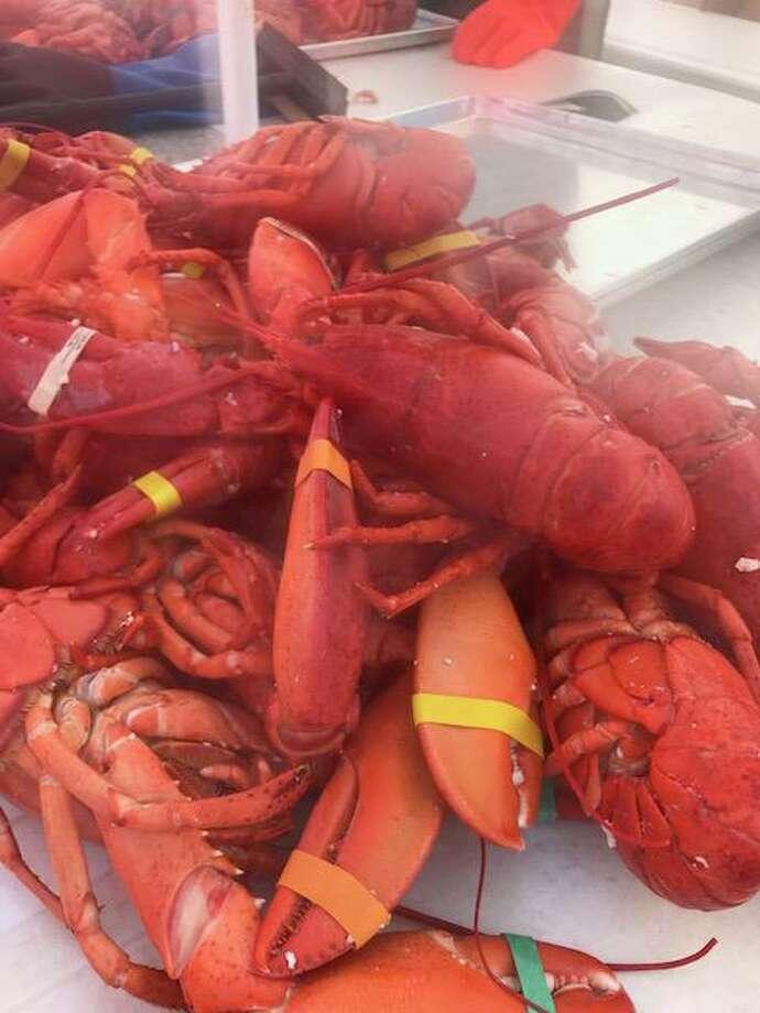 The members of Milford Rotary Club are gearing up to hold their 43rd annual Lobster Bake on Saturday, July 27. Photo: Contributed Photo