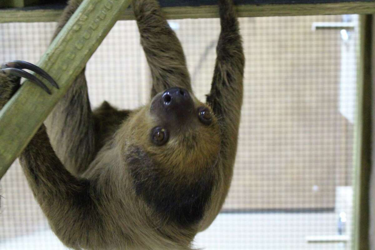 SeaQuest Trumbull features hundreds of species, including a sloth exhibit.