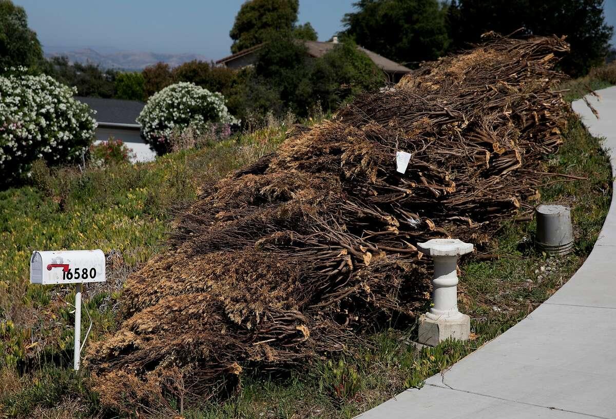 Piles of dried brush sit in front of a home waiting to be removed as part of the FireWise program in the Jackson Oaks neighborhood of Morgan Hill, Calif. Wednesday, July 3, 2019.