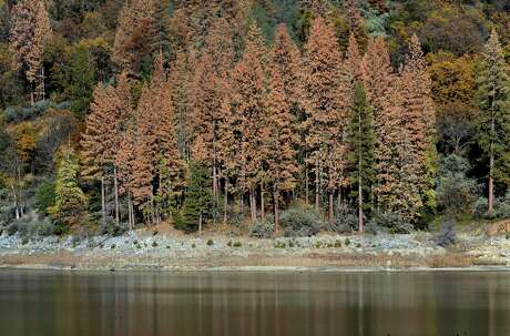 Dead trees stand at the water's edge at Bass Lake in Madera County in 2015.