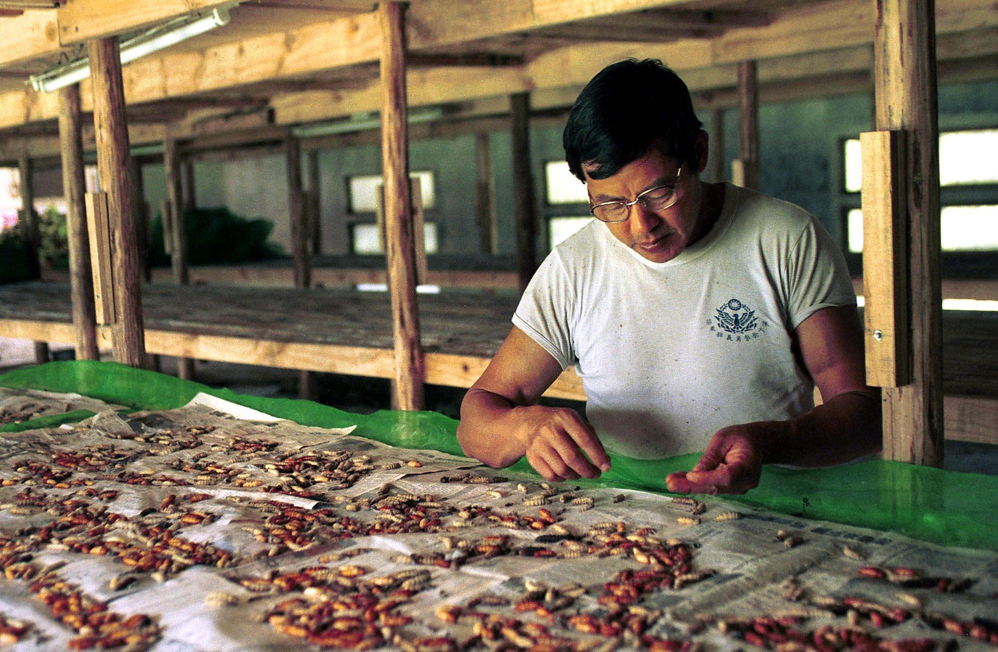 The Wonder Of Silkworms Past And Present Sfchronicle Com