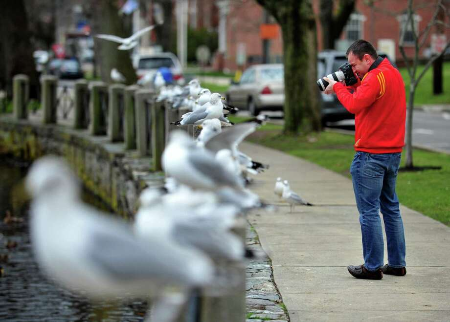 FILE PHOTO: Marcin Stawiarski, of Shelton, takes pictures of seagulls perched along the fence at the lagoon behind Milford City Hall on West River Street in Milford, Conn. on Thursday Dec. 31, 2015. Photo: Christian Abraham / Hearst Connecticut Media / Connecticut Post