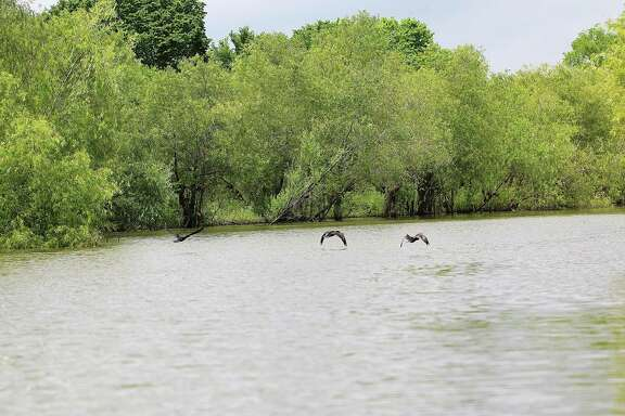 On any given day, waterfowl can be seen scavenging on the river for fish and bugs.