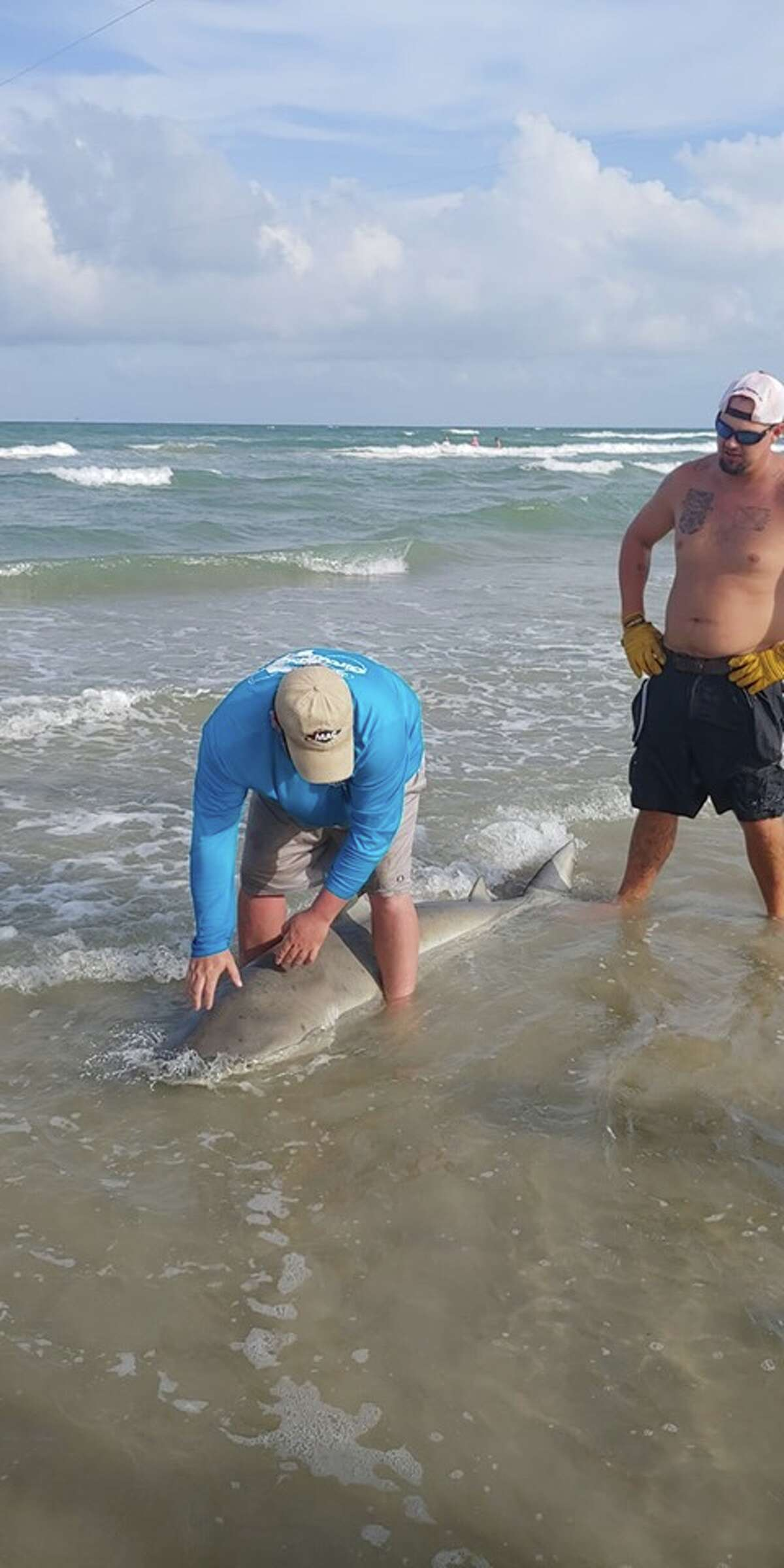 Jason Jenkins from Pleasanton caught a 7-foot-7 bull shark Sunday in Corpus Christi.