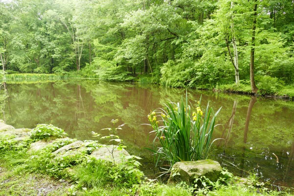 The pond at Waveny Park in New Canaan, Connecticut has a new name. It will be named the Anderson Pond after Lois and Harlan Anderson. Town Council voted Wednesday, June 19, 2019. Contributed photo