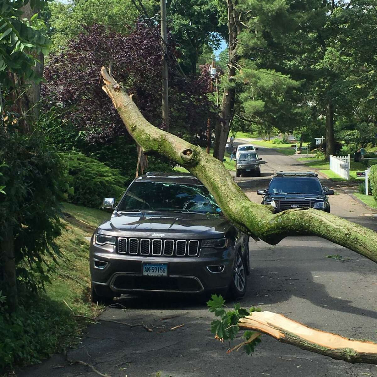 A tree down on Fitch Avenue.