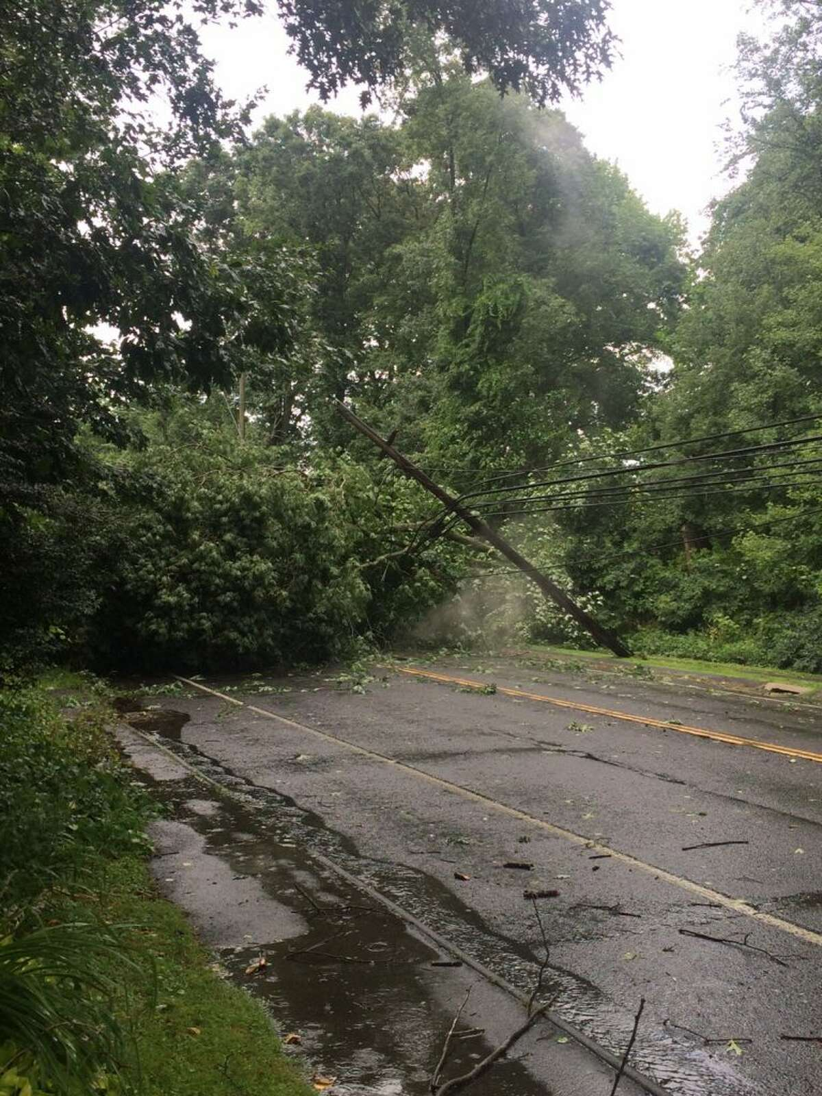 A tree down on Tokeneke Road lying on power lines. (courtesy Nanci Natale)