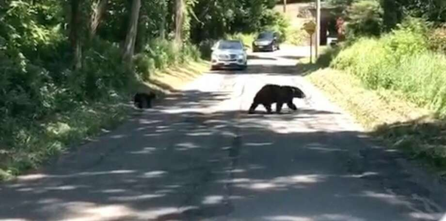 A bear sow was recorded crossing Simpaug Turnpike with her cubs Wednesday morning. — Brendan Gundersen / Contributed video