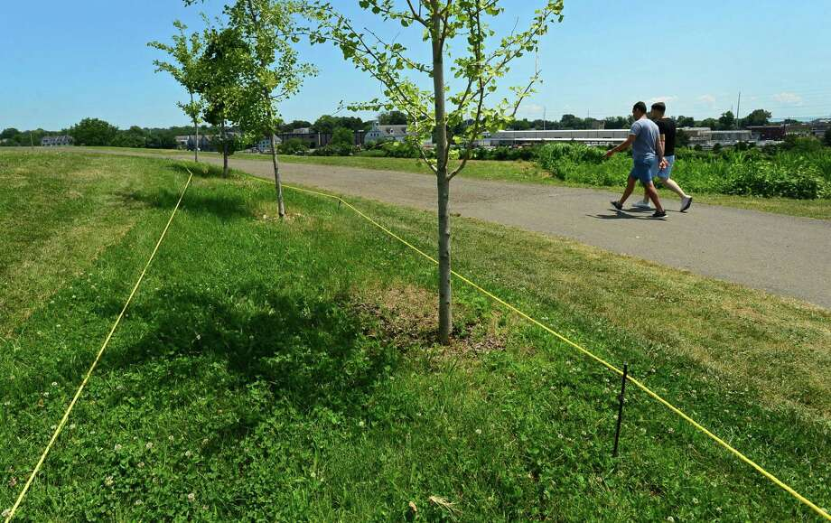 A Pollinator Pathway is roped off at Oyster Shell Park Tuesday, July 9, 2019, in Norwalk, Conn. After a row of milklweed plants in Oyster Shell Park was accidentally mowed last week, the Norwalk River Valley Association has received an abundance of donations and is in the process of replanting. Photo: Erik Trautmann / Hearst Connecticut Media / Norwalk Hour