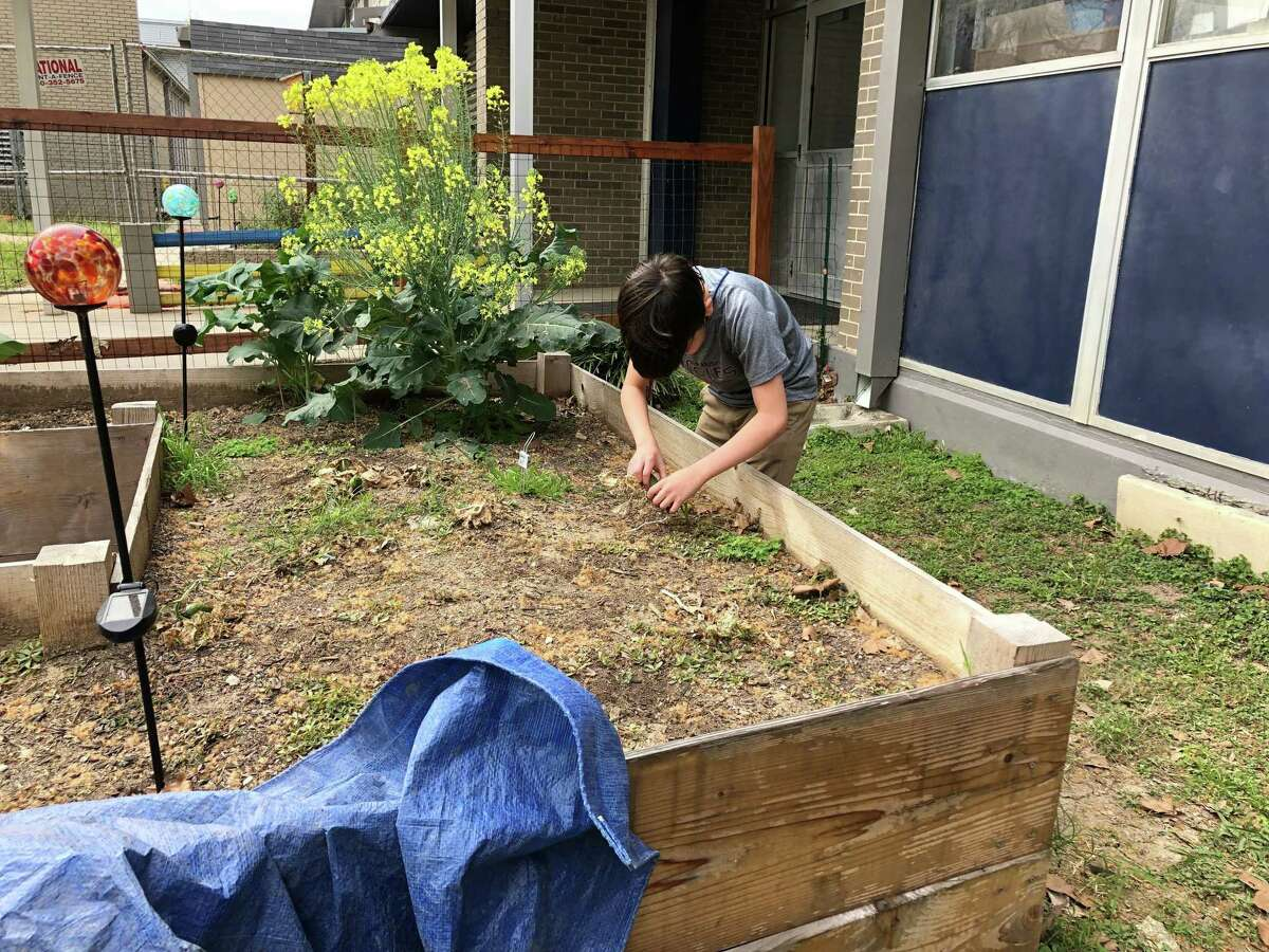 Students in Jennifer Humphrey's class at Nimitz Middle School received micro-grants from the nonprofit EcoRise for projects including gardening, composting and aquaponics.