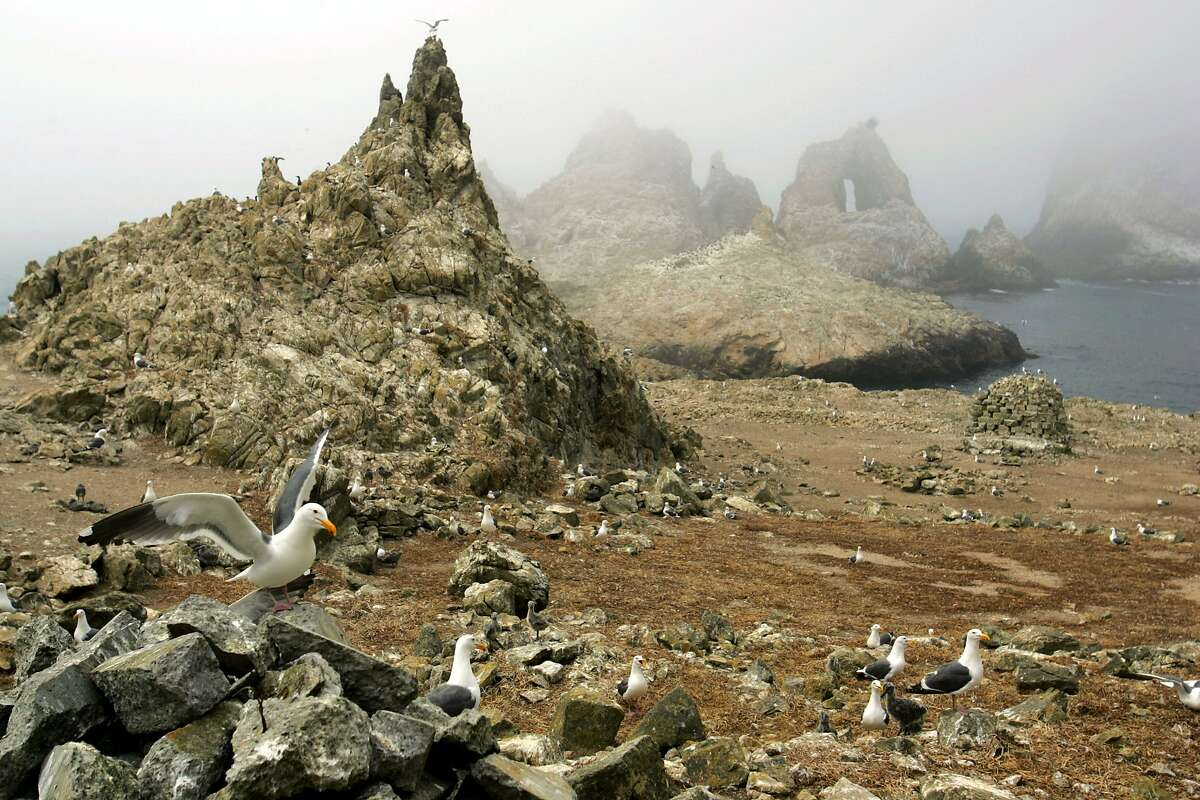Is there anything else that can be done to cull the invasive mouse population on the Farallon Islands? Here's what has been proposed - and rejected - in the past. >>>