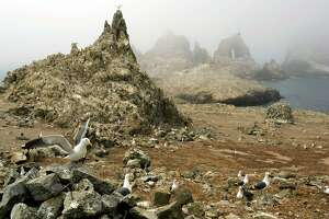 File - In this file photo from July 8, 2006, gulls are seen nesting near the North Landing area of the Farallon Islands National Marine Sanctuary, Calif. Federal wildlife managers are considering putting rodenticide pellets on the Farallon Islands to rid the wildlife refuge of non-native house mice that threaten bird species there. But animal rights activists are opposing the plan, saying other creatures will eat the rodenticide and spread it through the food chain. (AP Photo/Ben Margot, file)