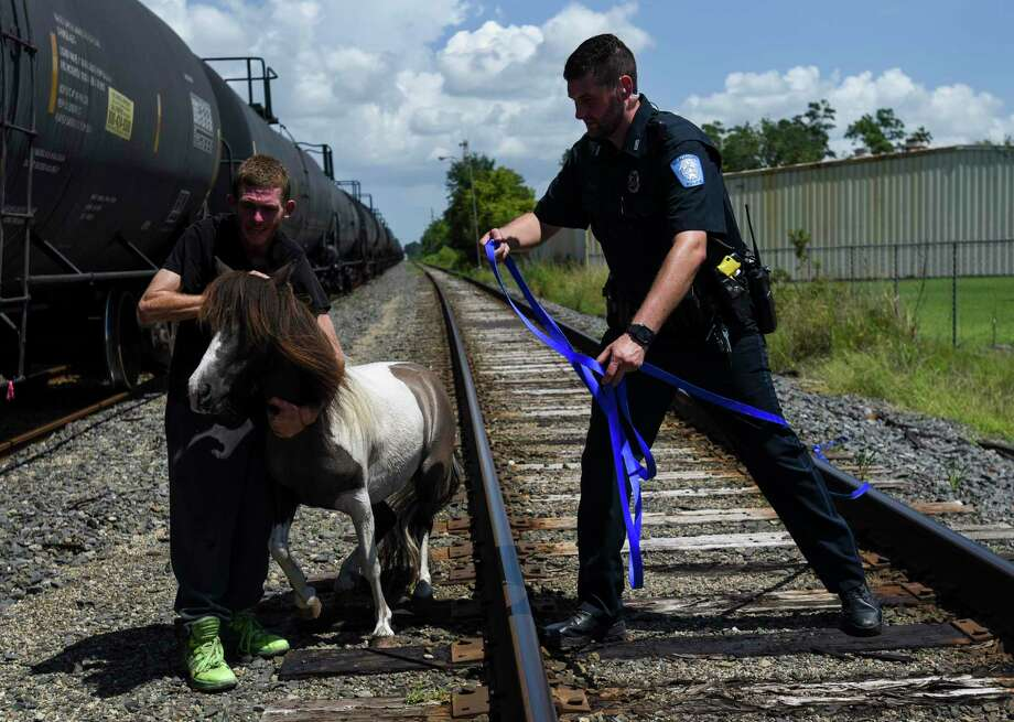 Meches, a two-year-old pony, is held by Alexander Dattalo while a Beaumont police officer holding a lease approaches cautiously off of Martin Luther King Jr., Pkwy after the pony escaped from its yard in 700 block of Threadneedle Street Tuesday afternoon. Beaumont Police, Animal Services and random passersby helped eventually capturer Meches.