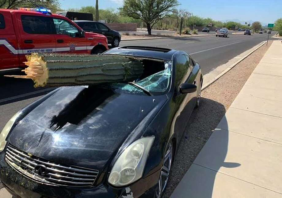 This photo provided by the Northwest Fire District shows where a driver escaped injury when his car's windshield was pierced by the trunk of a saguaro cactus during a wreck Wednesday, July 10, 2019 on the outskirts of Tucson, Ariz. Pima County sheriff's Deputy Daniel Jelineo said the black sports car struck the cactus while crossing a median before ending up on the other side of a road and that the cactus ended up slamming into the car's windshield. (Northwest Fire District via AP) Photo: Associated Press