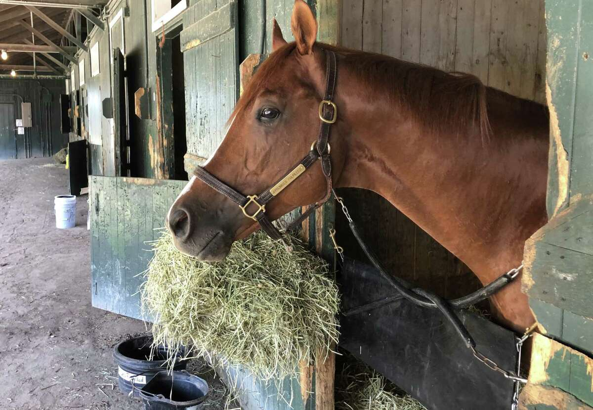 Happy Opening Day at Saratoga! Everyone has been waiting for this annual rite of summer to begin. So is one of the better thoroughbred sprinters in the land. This is Promises Fulfilled, who was all by himself at trainer Dale Romans' barn on the Saratoga backstretch Wednesday morning. He was waiting for his equine pals to show up and keep him company. We could see Promises Fulfilled in the Grade I Forego here on Travers Day. The 4-year-old is owned by Vorheesville's Bob Baron. (Tim Wilkin / Times Union)
