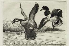 """Duck hunters, birders, waterfowl and nature lovers are in for a treat as the Stark Museum of Art in Orange presents """"Conservation Art: Federal Duck Stamps and Prints."""" This exhibit features the Federal Migratory Bird Hunting and Conservation stamps from 1934 through 2001."""