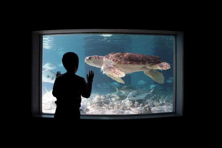 "Lights will be dimmed and sounds muted as The Maritime Aquarium at Norwalk presents a ""Sensory-Friendly Evening"" on July 18. The aquarium will re-open from 6:30 to 8:30 p.m. and offer activities designed for guests with sensory-processing differences. Plus, admission will be discounted, and an IMAX movie will be shown with reduced volume and the theater lights brighter than usual. Photo: Maritime Aquarium / Contributed Photo"