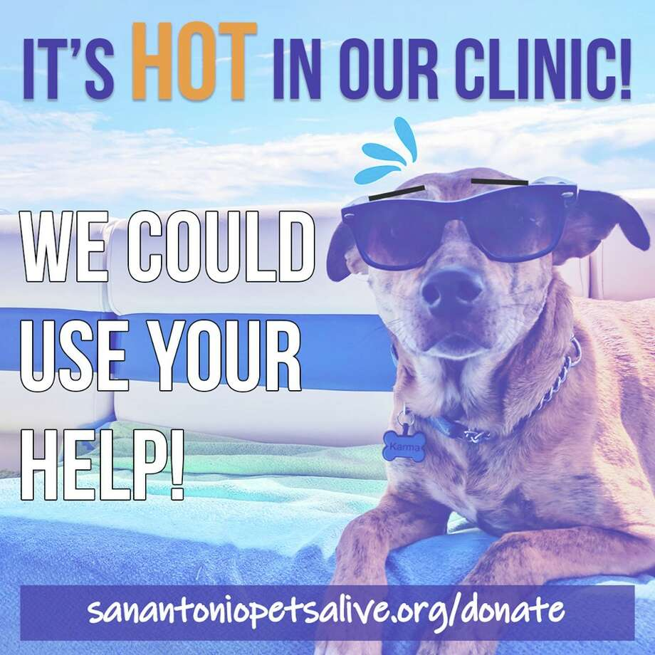 "The non-profit put a call out for help on Thursday via Facebook, explaining that one of the air compressors at the clinic broke and the temperatures were ""brutally hot."" The $3,150 in repairs is a ""hefty, hefty unexpected expense."" Photo: San Antonio Pets Alive!"