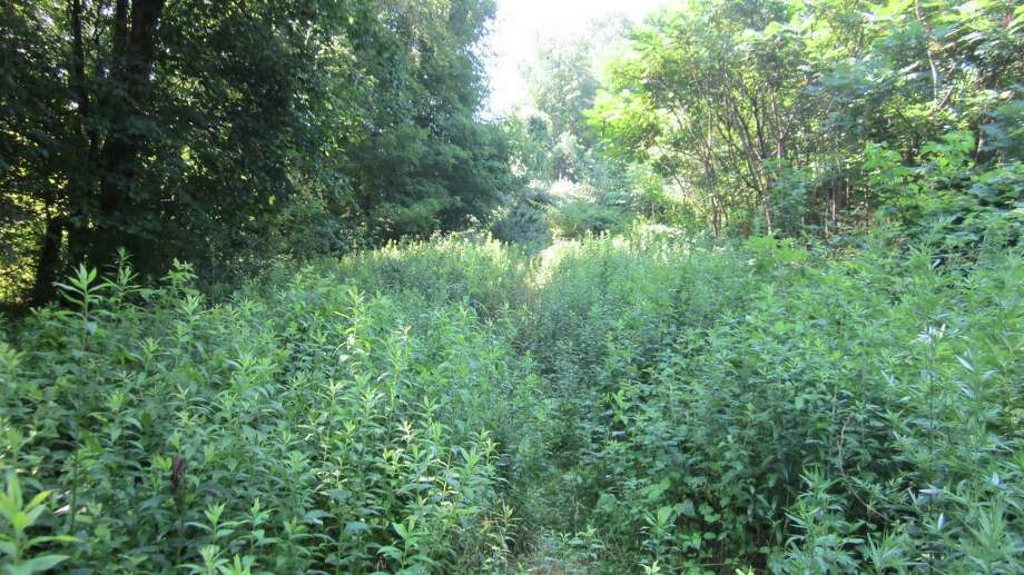 The Shelton Trails Committee will be clearing a section of the Paugussett Trail near Meadow Street on Saturday, July 13. Photo: Contributed Photo / Connecticut Post
