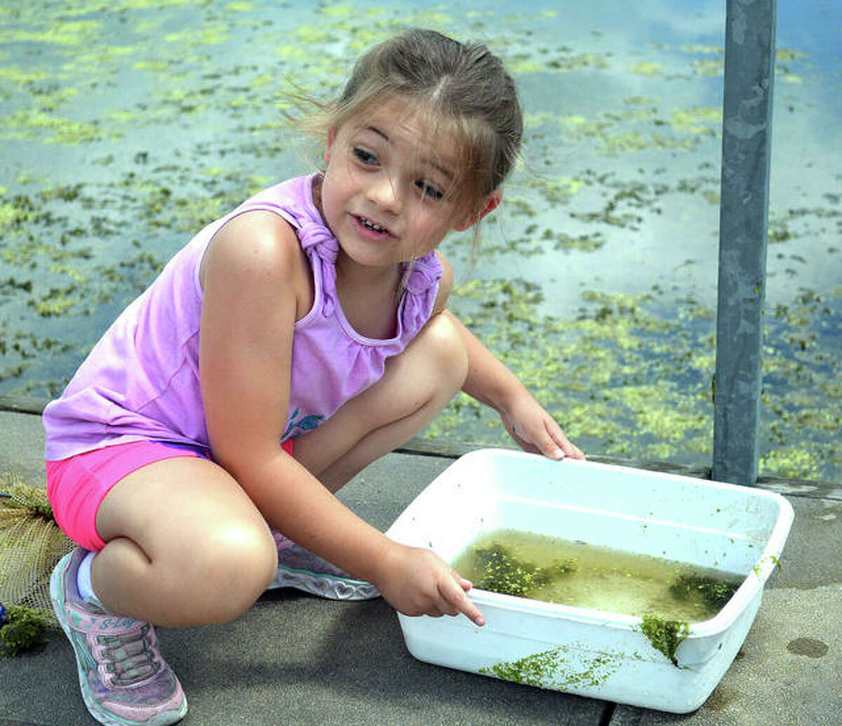 """Armed with a net and a bucket, kids got to examine their catch during dip-netting on Thursday as part of Thursday's """"Wetlands"""" theme for the """"Reading in Nature"""" program at the Watershed Nature Center."""