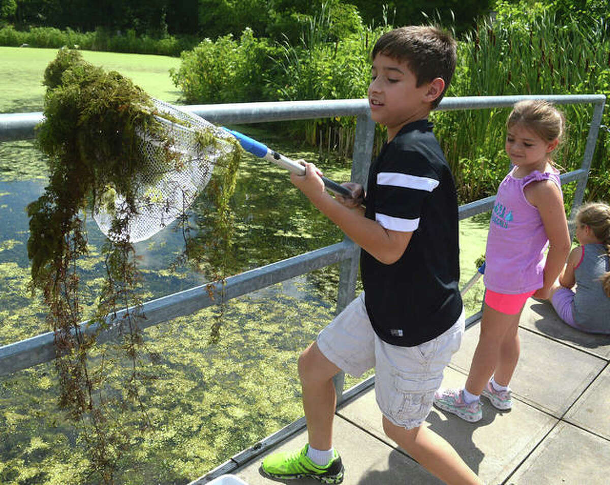 """The theme for Thursday's session of the """"Reading in Nature"""" program at the Watershed Nature Center was """"Wetlands,"""" and kids got to do some dip-netting - going onto the dock of the Watershed pond with nets and buckets to see what kind of animal life they could scoop up."""