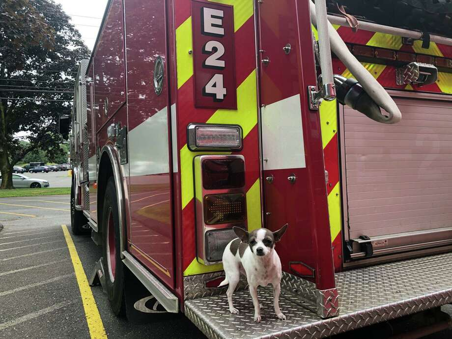 Camilla hanging out on the back of Engine 24. Photo: Danbury Fire Department / Facebook