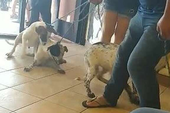 """""""One of them had fallen over and couldn't keep up with him and he was dragging her on her back on the pavement outside,"""" Amy Stroud of Wag Again Rescue said. """"People wanted to go over and try to help the dogs [and] just literally carry them in [themselves]."""""""